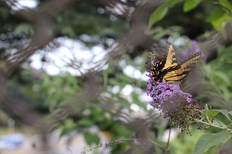 butterflies Eye