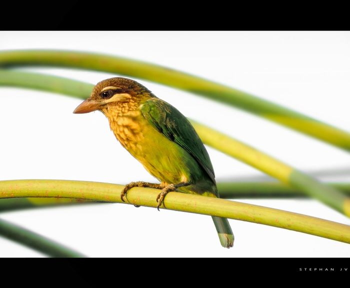 Birds Bird Photography India Kerala Alone Birdwatching