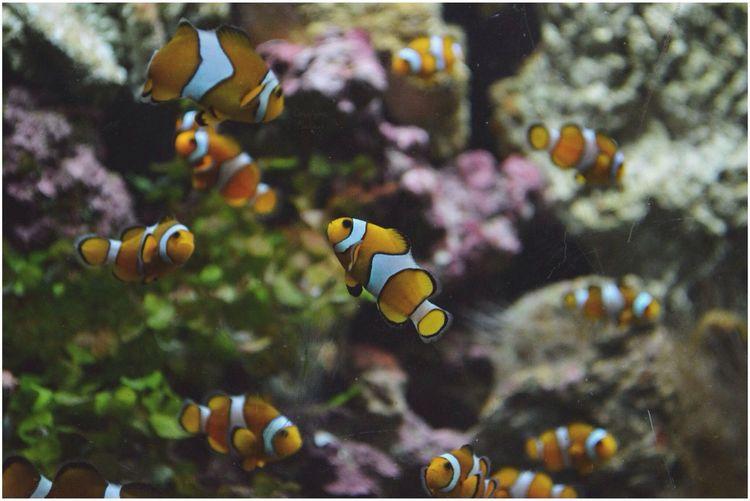 Colors Aquarium Taking Photos First Eyeem Photo