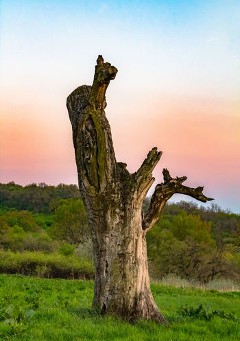 Alone Alone Colors Hatvan Hungary Sunset_collection Beauty In Nature Branch Close-up Colorful Day Dead Tree Grass Landscape Nature No People Outdoors Scenics Sky Sunset Tranquility Tree Tree Trunk EyeEmNewHere The Still Life Photographer - 2018 EyeEm Awards