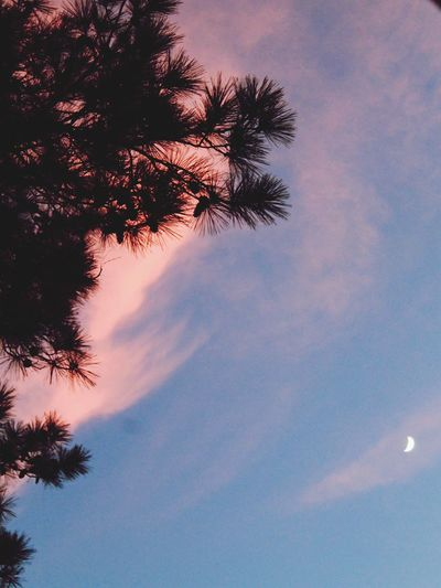 Tree Low Angle View Sky Silhouette Moon Cloud - Sky Outdoors Astronomy Nature No People Sunset Beauty In Nature Pink Pine Tree Texas United States Houston Texas