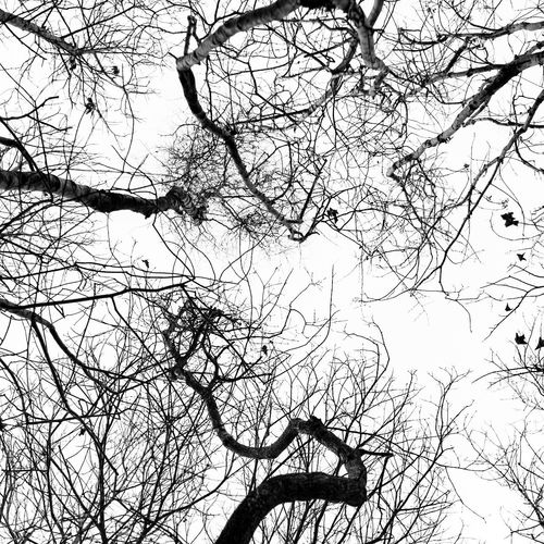 Bare Tree Beauty In Nature Branch Look Up Lookingup Low Angle View Nature Outdoors Silhouette Sky Tranquility Tree