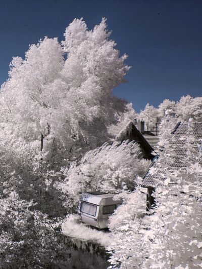 Houses Amidst Trees Against Clear Sky