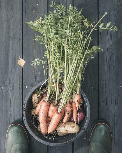 Garden harvest EyeEm Selects Herb Studio Shot Wood - Material Raw Food Root Vegetable Carrot Farmer Market Potato Raw Potato