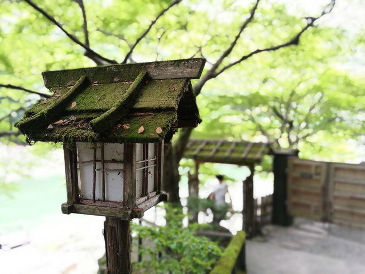 日本 Green Color Outdoors Close-up 燈籠 Feeding  HuaweiP9Photography Japanese Culture Japanese Garden Huaweiphotography Huawei Photography Kyoto