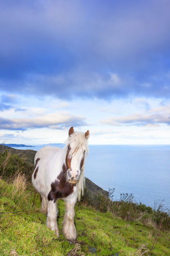 Horse standing on field by sea against cloudy sky