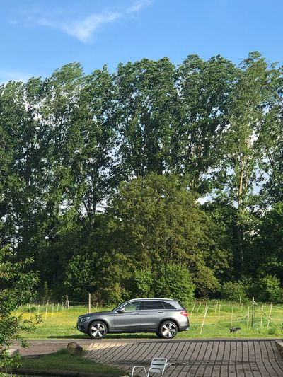 Car on road by trees in forest against sky
