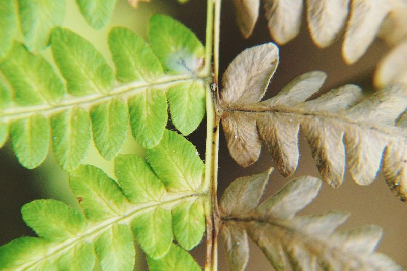 Green and brown Autumn Fall Fern Shades Beown EyeEm Selects Leaf Close-up Plant Green Color Frond