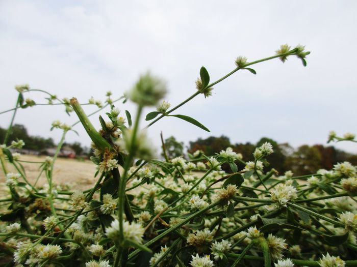 EyeEm Selects Tree Flower Sky Close-up Plant Flowering Plant Plant Life In Bloom Blooming Botany Blossom Flower Head