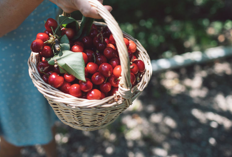High angle view of hand holding cherries in basket