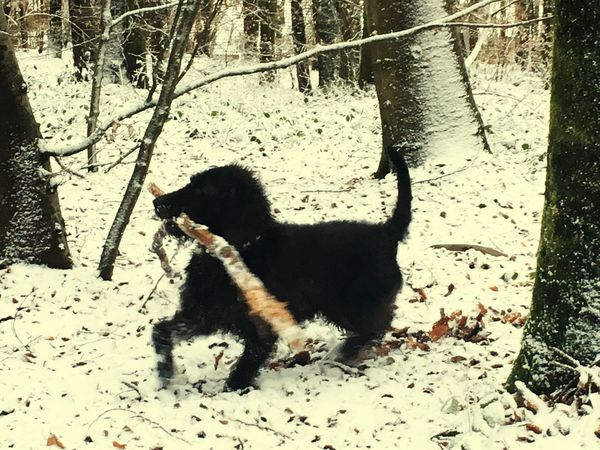 A dog and the snow Animal Themes Dog One Animal Day Pets Domestic Animals Mammal Sunlight Full Length Shadow Outdoors No People Nature Feline Cold Temperature Winter A Walk To Remember Forest Driving Around Walking The Dog