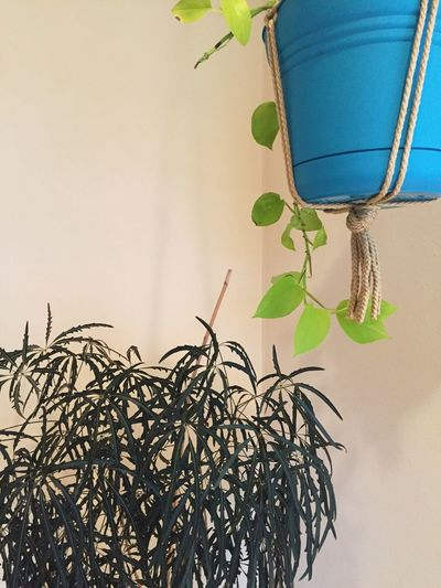 Plant life Plant Leaf Nature Indoors  Growth No People Day Close-up plant room hanging plants First Eyeem Photo