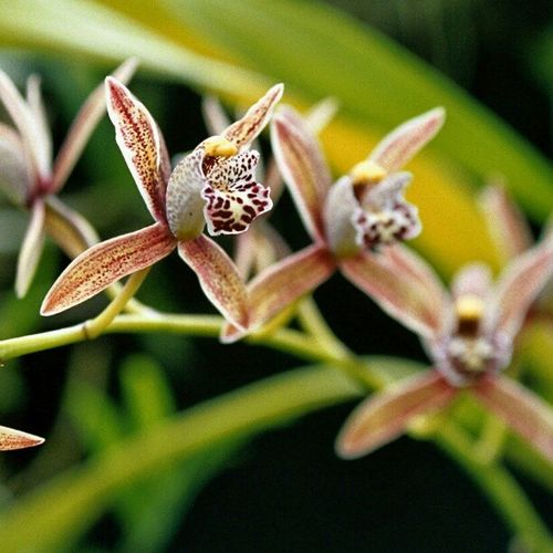 Orchids. #orchid #orchids #flower #nature #nofilter #macro #canonae1 #canonae1program #slr Nature Flower Macro Orchids Orchid SLR Nofilter Hot_shotz Amazigram Instagood_germany Canonae1program Canonae1