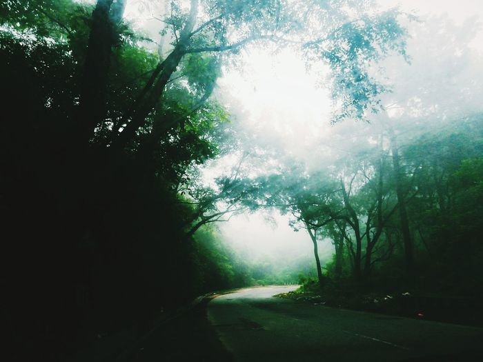 Fog Tree Road Landscape Morning Outdoors Sunlight Forest Nature Day No People Rural Scene Scenics Beauty In Nature Travel Destinations Freshness Meghalaya Shillong Laitlum Sky Green Color Tree Vacations Adventure Mountain Pet Portraits The Week On EyeEm Lost In The Landscape