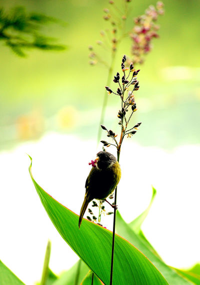 Close-up of insect on a plant