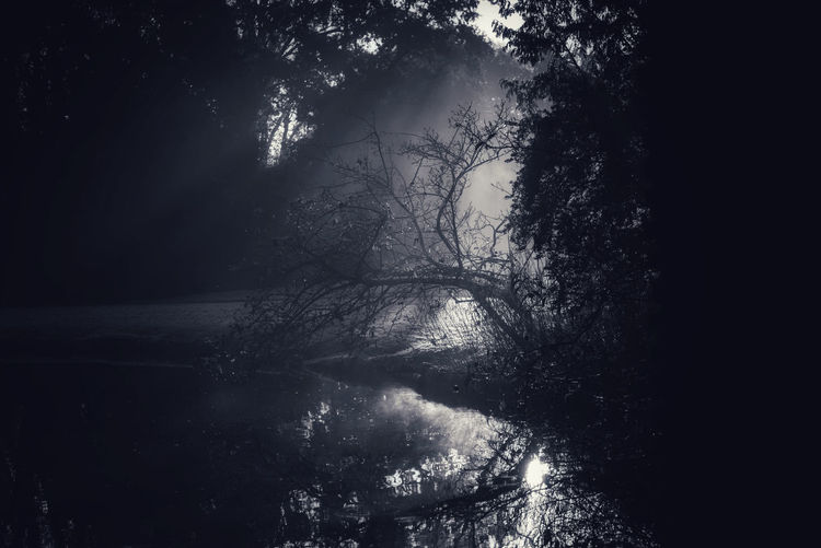 Silhouette trees in forest