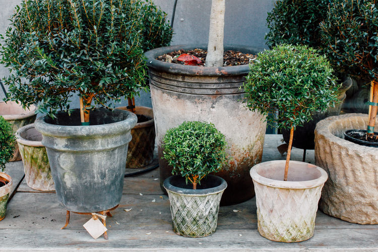 Plants in post on a bench at autumn Autumn Formal Garden Group Of Objects Growing Growth Nature No People Outdoors Plant Plant Life Pot Plant Potted Plant Terracotta