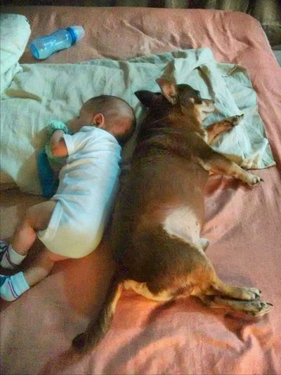 Sentidos Opuestos DogAndChild Babyboy Babymexican Dog