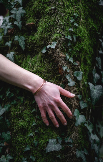 Midsection of woman hand on plant