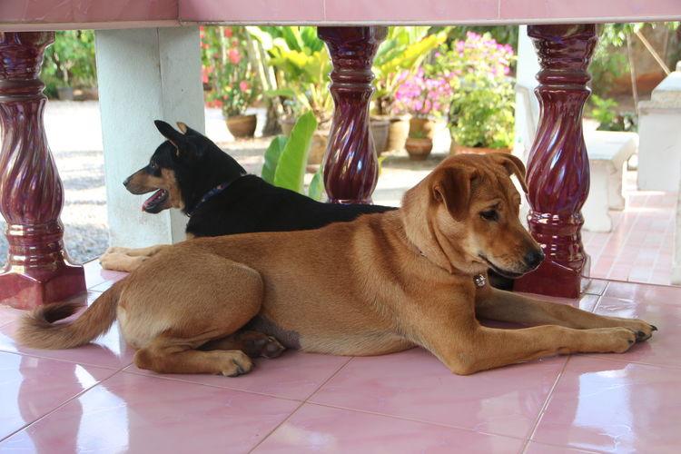 Dog sitting on tiled floor