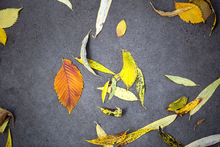 High angle view of autumn leaves on street