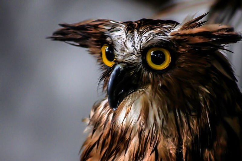 Eyeball Bird Of