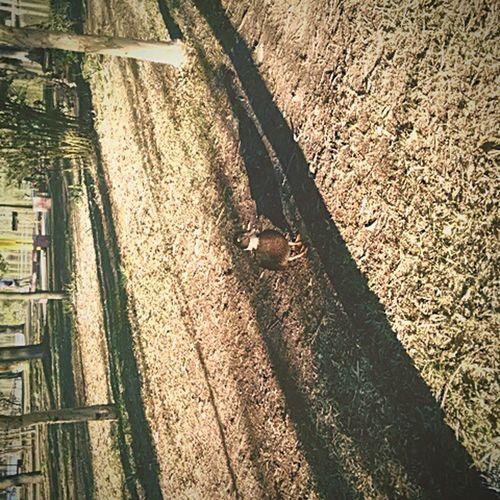 Duck ParqueDeLaAmistad Tj Animals