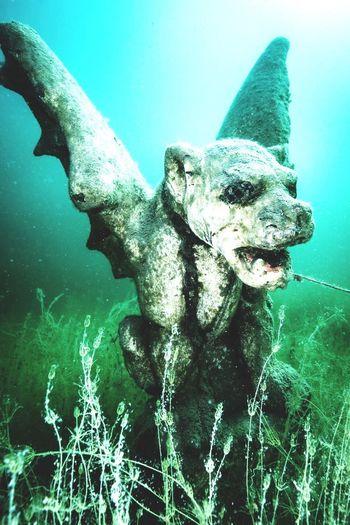 Gargoyle Deepsea Terquois