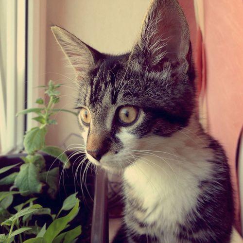 My New Pet Jónsi  Cat