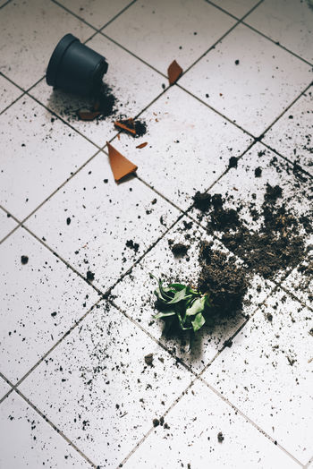 A plant with pot ist falling down Plant Part Broken Day Destroyed Dirty Falling Down Floor Flooring Green Color High Angle View Indoors  Leaf Leaves Mistake No People Plant Plant Part Plantpot Pot Roots Still Life Terracotta Tiled Floor