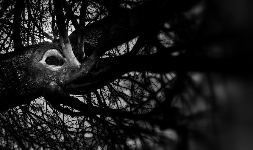 Giant Octopus Outside Landscape Enjoying The Sun Inspiration Eyeemfun EyeEmbestshots BikeTrail Eyeemphotography Mood Eye4photography  Lostplaces EyeEmBestPics Abandoned Places Tree Tree Trunk Octopus Underthesea Blackandwhite Bnw Black And White Photography Blackandwhite Photography Black&white