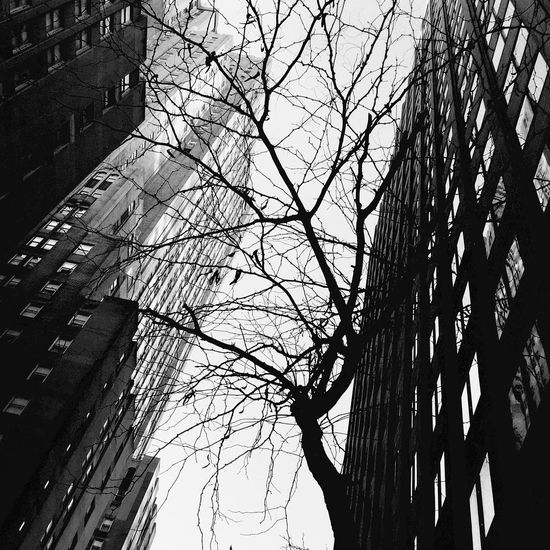 Midtown, New York City Newyorkcity New York First Eyeem Photo New York City New York City Life New York City Streets New York City Photos Buildings Blackandwhite Black And White Collection  Eye4photography  IPhoneography Iphoneonly Branch Building Black And White Blackandwhite Photography Black & White Manhattan City Lookingup Branches
