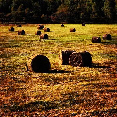 Fall Scene in Vermont. #miltonvt #vt Instamood Instagramjit Bestoftheday Instagood Vt_farm Fall Webstagram Farm Vt Countryside Vt_scenery Iphoneonly Vermont_scenery Photooftheday 802 Brown Miltonvt Picoftheday Igharjit Farmland Vermontbyvermonters Hay Vt_scene Vermont Vermont_scene Igvermont Haybales  Igvt Vt_landscape