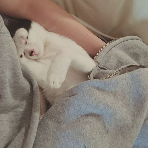 おやすみ ハチワレ しろくろ猫 にゃん 雨ちゃん