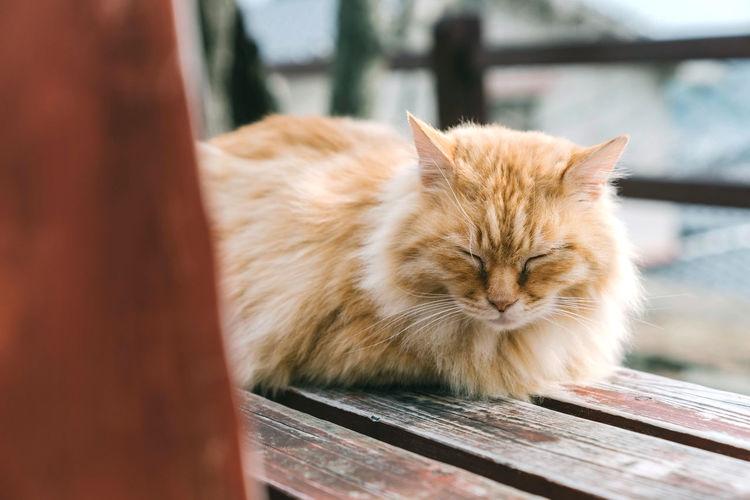 Sleeping cat in onomichi city, hiroshima, japan