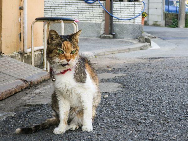 Stray Cat Cats Of EyeEm Cat Gato EyeEm Best Shots Cat Lovers Funny Cat Animals at Enoshima 江の島 in Japan