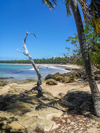 Beach Beauty In Nature Day Horizon Over Water Morro De São Paulo Nature No People Outdoors Palm Tree Sand Scenics Sea Sky Tranquil Scene Tranquility Tree Water