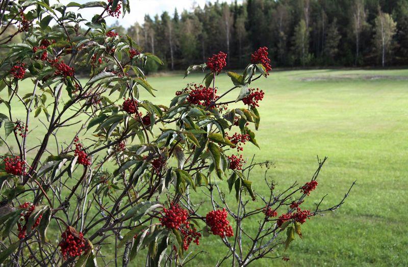 Red flowering plants on tree