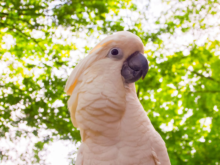 Clara the cockatoo Cockatoo Feathers Animal Themes Beak Bird Close-up Cockatoo Day Domestic Animals Exotic Pets Leafy Low Angle View No People One Animal Outdoors Parrot Perching Pets Portrait Tree White Color
