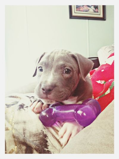 zeus baby, the cutest lil puppy ever