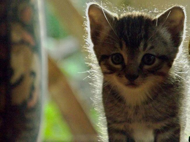 MyLittleCat 💕 🐱 Cat♡ Animal Love Rigby  Sun OpenEdit Open Edit Popular Photos