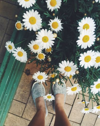Feet Summer Summertime Bare Legs Flowers Flowers In My Garden Flowers In A Pot Daisy Daisy Flower Daisies Summer Shoes