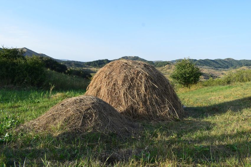 Haystack EyeEmNewHere Field Nature Day Outdoors No People Landscape Growth
