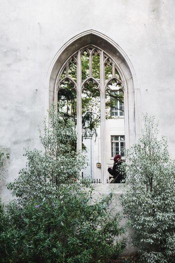 Plant Arch