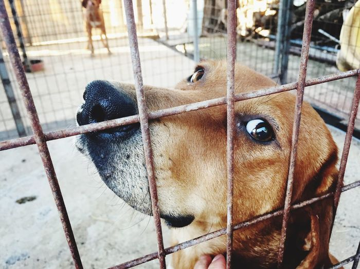 Close-Up Of A Dog In A Cage