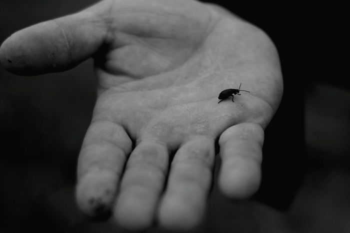 Human Hand Animal Themes Human Body Part One Animal Insect Animals In The Wild Human Finger Focus On Foreground Real People Day Nature People Palm Outdoors Close-up One Person Blackandwhite Monochrome Photography Protector Dimensionofthenature Contrast