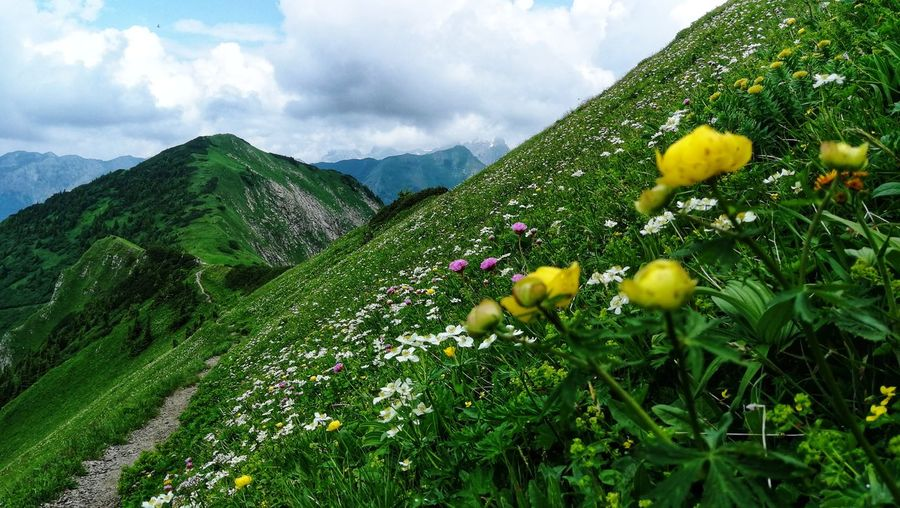 Yellow Flowering Plants Growing On Land Against Sky