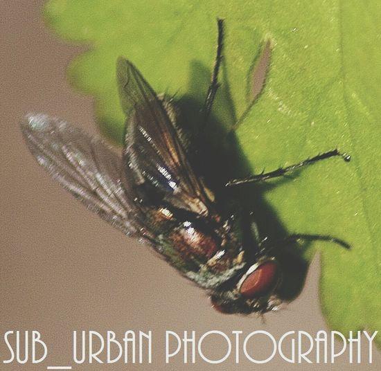Super fly Bugs Abugslife Macro Photography