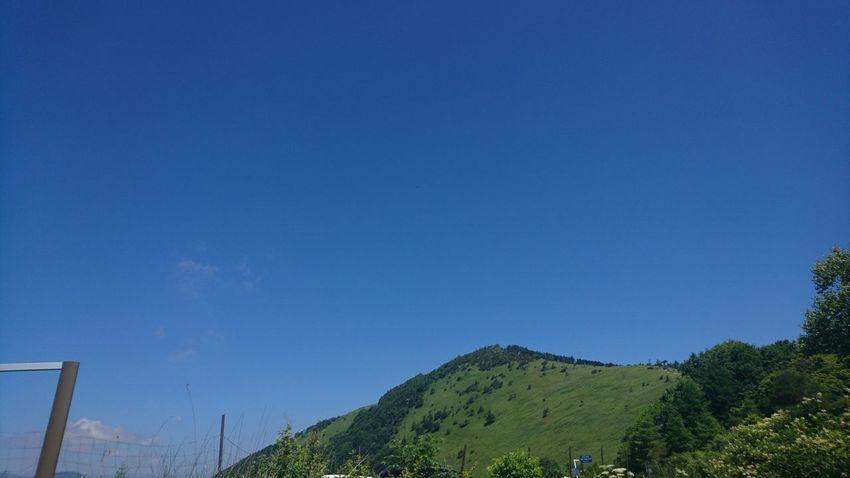 Tree Clear Sky Blue Sky