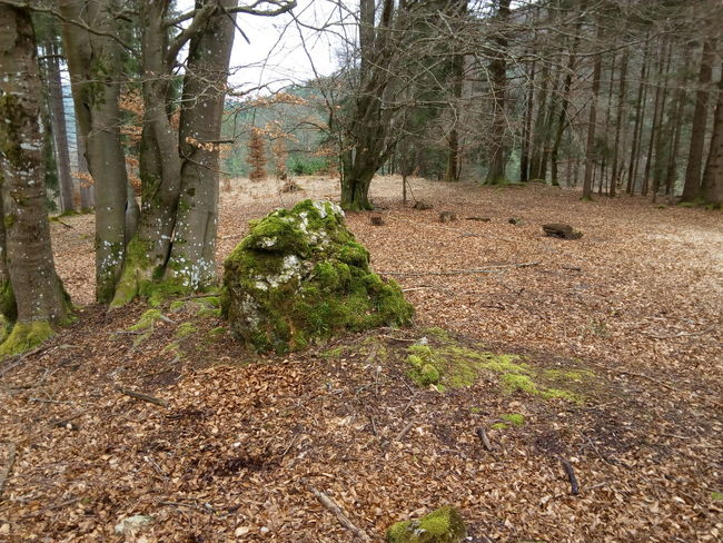 Was Siehst Du? What Do You See? Nature Stones Outdoors Natur No People Stone Forest Rock Waldweg Im Wald Stein Moos Kurioses  Kurios Fels Forest Art Forestphotography Forest Photography Bq Stone - Object Felsblock Bqaquaris